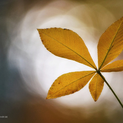 Herfstblad in tegenlicht