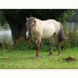 Wilde paard