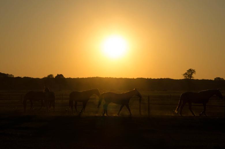 Wild horses -