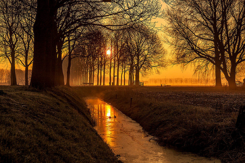 Golden Misty Morning in de Betuwe