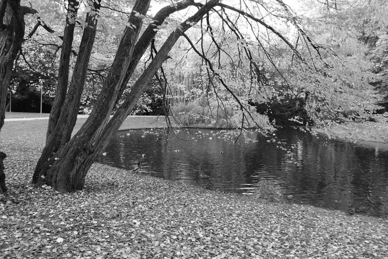 Park - Bij de vijver in het park!