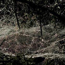 druppels in het web