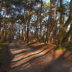 zandweg in bos hdr1