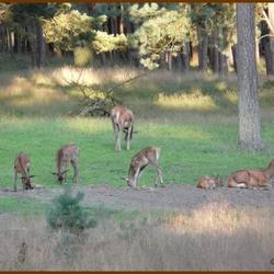 Groep herten