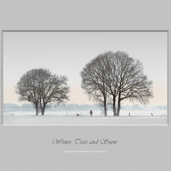 Winter Trees and Snow