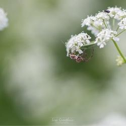 De spin en haar prooi