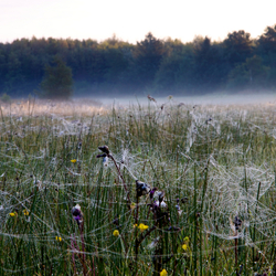 Een veld vol spinnenwebben