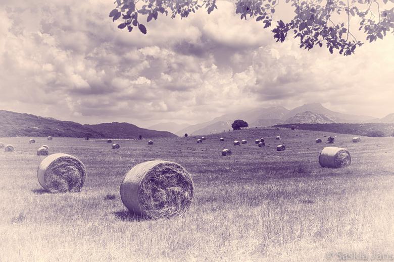 Mid Summer Hay - Corsica farmland...