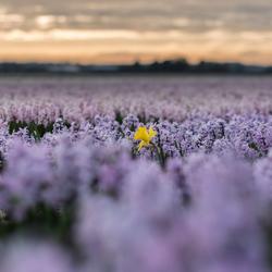 Een vreemde ..... bloem in het veld