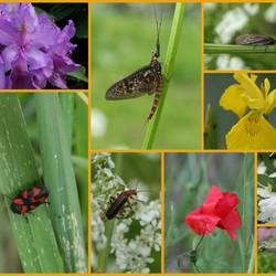 Insektenallergaartje