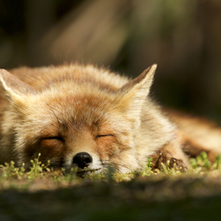 Sweet Dreams.