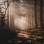 Mistige zonsopkomst in het bos