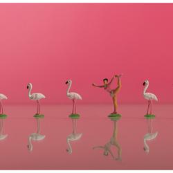 flamingo-danseres
