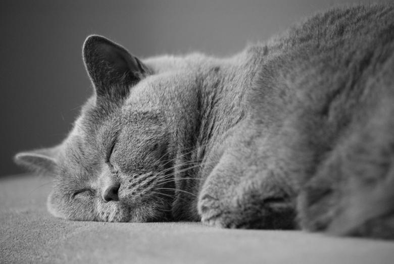 In diepe slaap