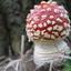 Hoe mooi kan een paddenstoel zijn