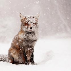 Fox Fairytale