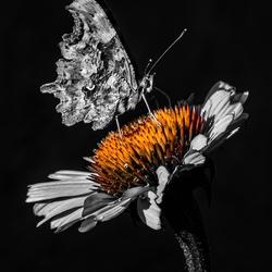 flower season