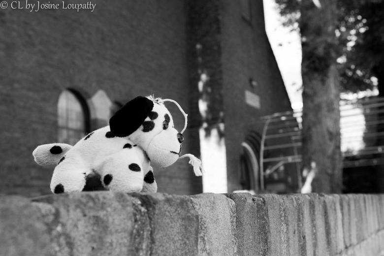 Life outside - Ik liep naar buiten en ik zag dit verlaten klein knuffeltje op het muurtje. Ben naar binnen gegaan en heb mijn camera erbij gepakt. Ik