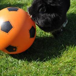Kiwi aan het voetballen
