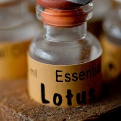 Essentieele Lotus