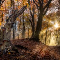 Speulderbos in fraaie herfstsfeer......