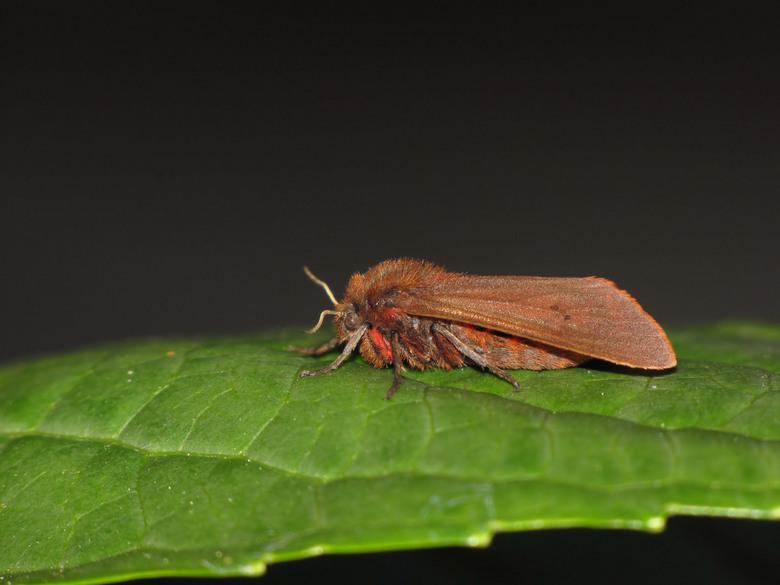 vlindertje - zo vind ik em zelf wel oké.op een blad is toch mooier dan op m&#039;n vinger zoals de vorige die ik had geplaatst.<br /> groet Ap.