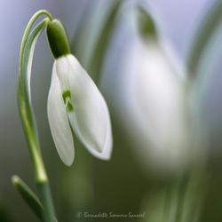 Schijnbaar lente