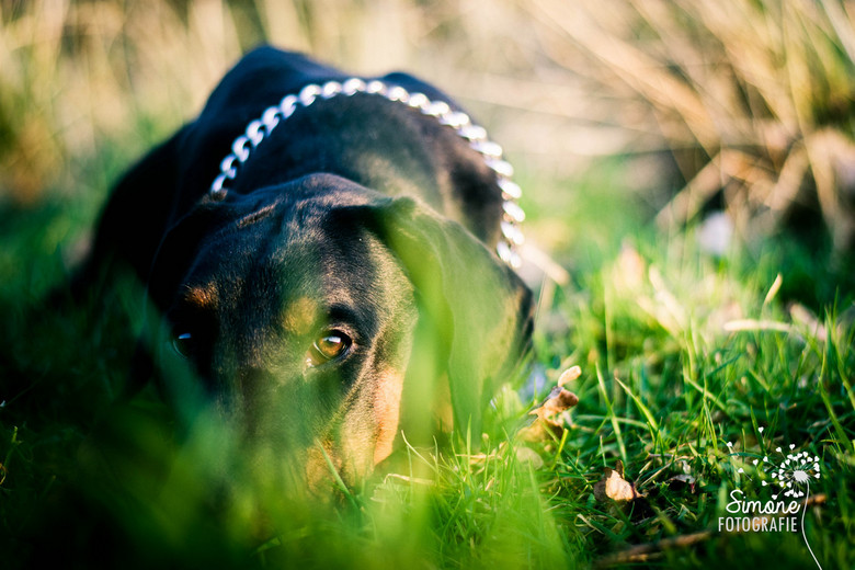 """Zonsondergang - Samen met mijn hond gewandeld, de laatste minuten van de zon nog meegenomen <img  src=""""/images/smileys/smile.png""""/>"""