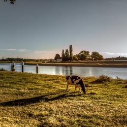 Koe & landschap