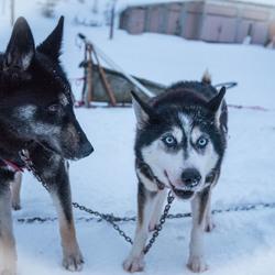 Good doggies