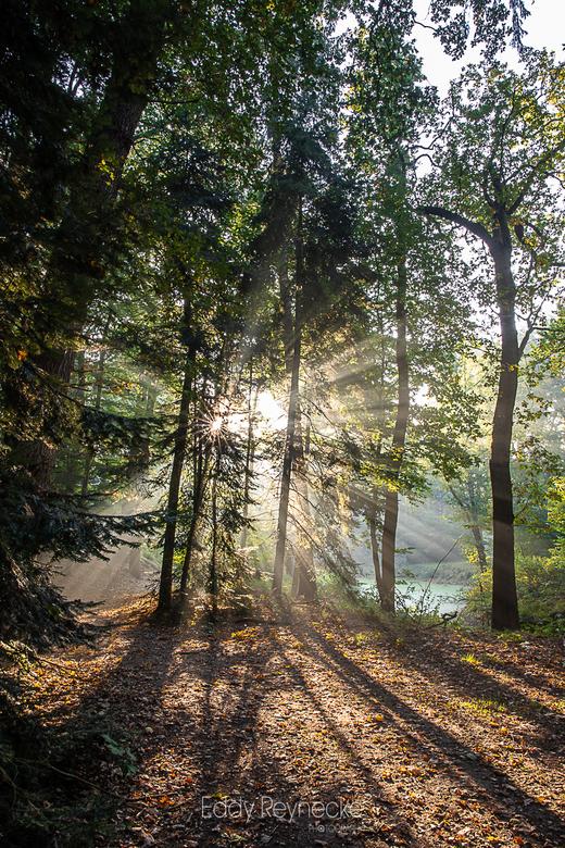 Sunbeams - Prachtige sfeer met de zonnestralen door de bomen in het Slochterbos.