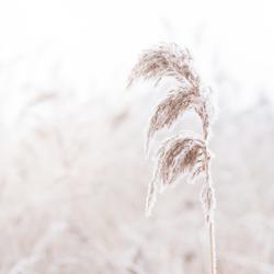 Een pluim voor de winter