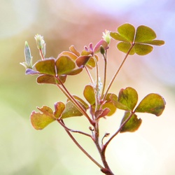 Klein plantje in onze tuin