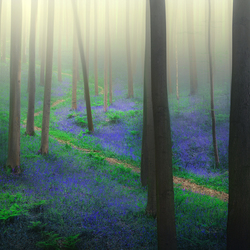 Lost in bluebells