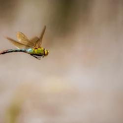 Flying Emperor