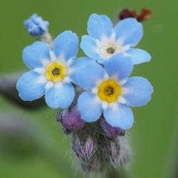 Een heeeel klein bloemetje