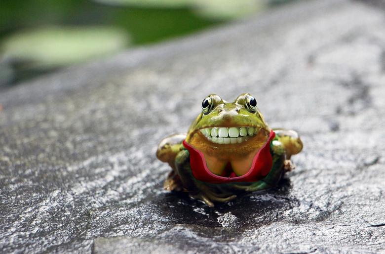 vrolijke kikker -