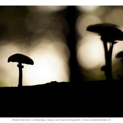 Mushroom Mood 2 | Duivelsberg | Berg en Dal