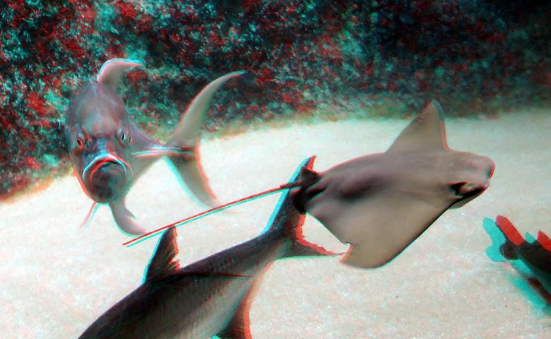 Pijlstaartrog Oceanium Blijdorp Zoo 3D - Oceanium Zoo Blijdorp Rotterdam<br /> Fuji W3anaglyph