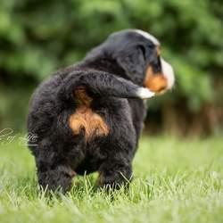 Shake that puppy ass