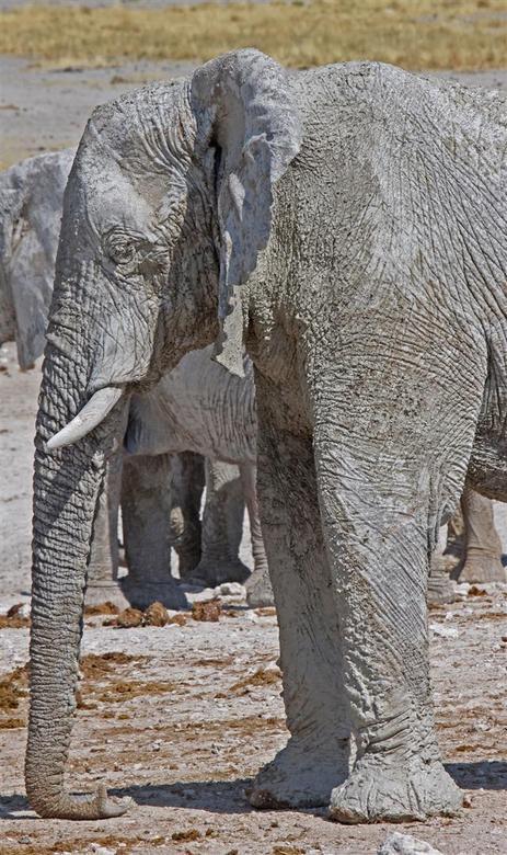 toen blies een olifant - met zijn lange snuit het verhaaltje uit.<br /> <br /> Beste Zoomers, ik ga er mee stoppen. Dit is mijn laatste foto.<br />