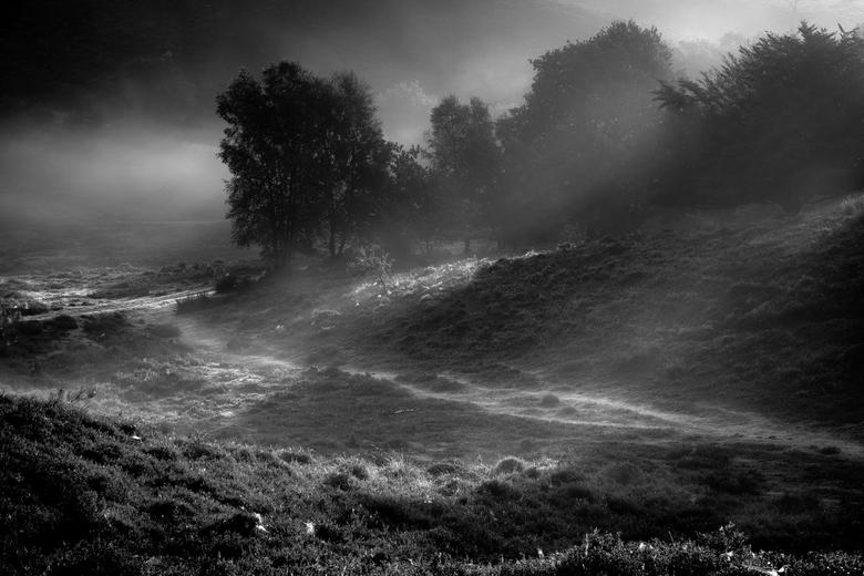 Mist Veluwezoom - Mistige ochtend op de Veluwezoom