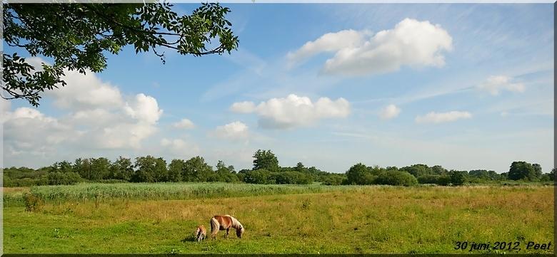 Natuurgebied - Een foto van zaterdagmorgen, dit is vlak bij Veenendaal en een mooi natuurgebied.