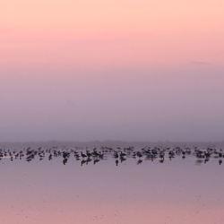 Bird Lake....