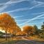 Gele bomen Zeeland