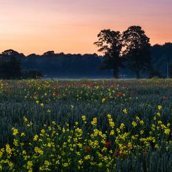 Bloemen en een zonsondergang