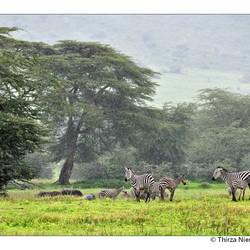 Ngorongoro Painting