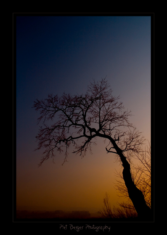 Yellow Sunset Tree - Mijn ooh zo geliefde boom die ik echt al heel wat jaren ken, en zelfs hoi begin te zeggen.<br /> Ik heb heb weer eens geweldig o