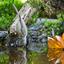 Poecile palustris, Glanskop