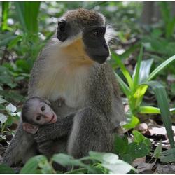 Moeder en kind (2)